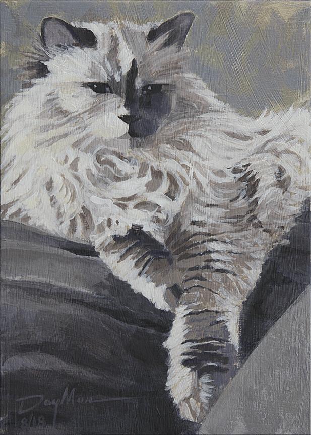 paris royal comfort, kitty